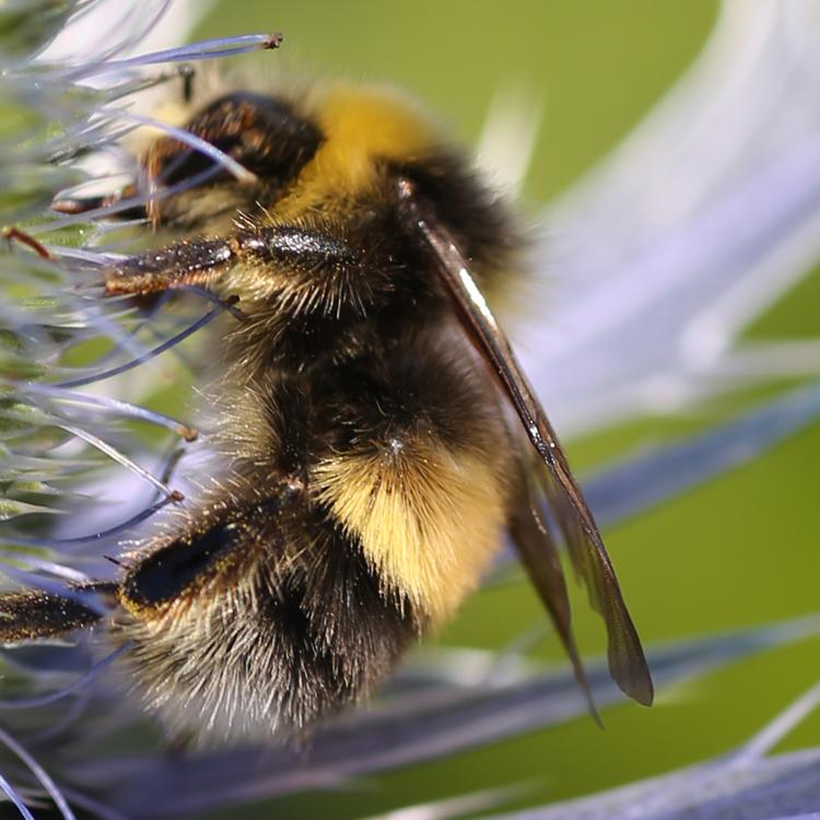 Borders gardener - Floors Castle Plant Centre - Bumble Bee 3